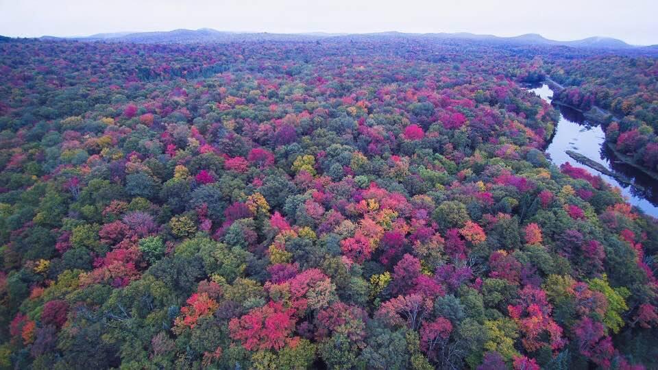 Fall Foliage 10.4-18