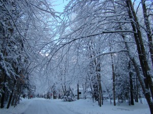 Winter Scenery 8