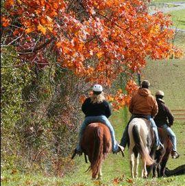 horseback riding fall