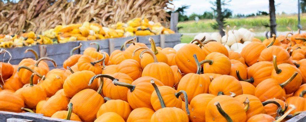crates of pumpkins and corn stalks